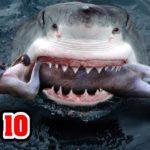 Top 10 Most DANGEROUS ANIMALS In AUSTRALIA 8