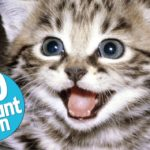 Top 10 Domesticated Cat Breeds 8
