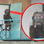 Top 10 Creepiest Google Earth Images - Part 2 9