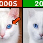 10 MOST EXPENSIVE PETS IN THE WORLD 9