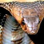 Top 10 TERRIFYING Snakes That Will Probably KILL You 6