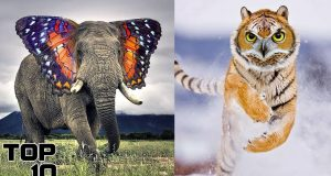Top 10 Animals Created By Science 4