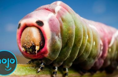 Top 10 Weirdest Insects 10